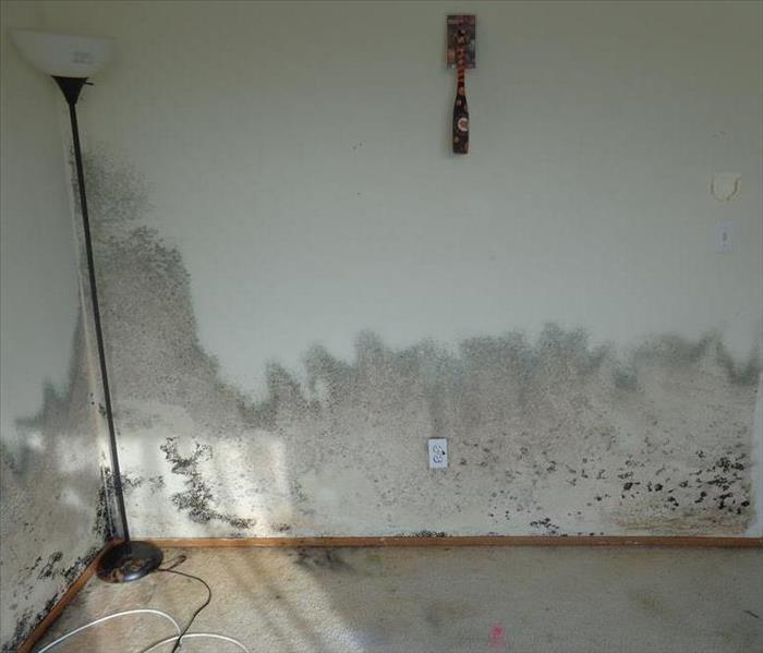 Mold Remediation When it comes to Mold, What you Can't See Can Hurt You